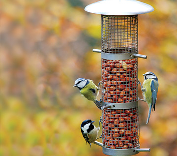 garden-birds
