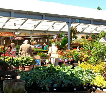 garden-gardening-and-plants